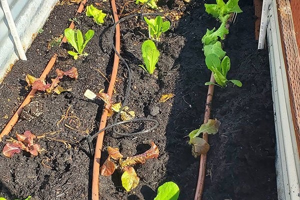 drip irrigation in garden