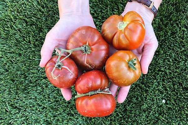 tomatoes-in-hands